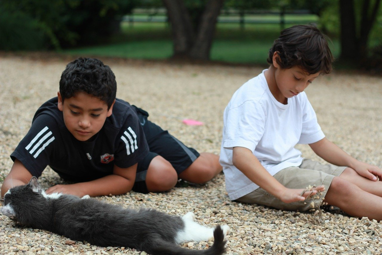 two brothers petting their cat and playing with rocks