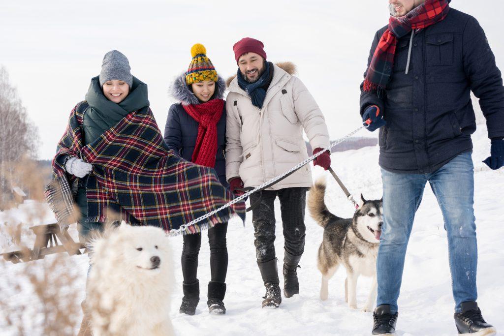rock salt for pets: SALT ON DOGS PAWS, ROCK SALT POISONING IN PETS